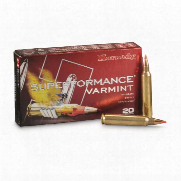 Hornady Superformance Varmint, .204 Ruger, V-max, 40 Grain, 20 Rounds