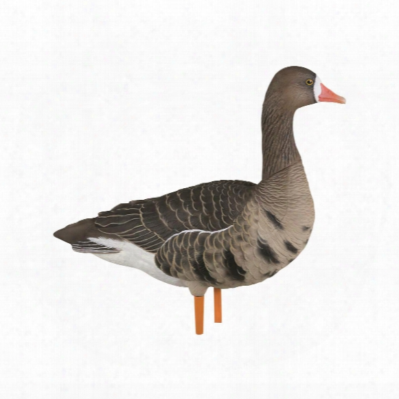 Avian-x, Axf Flocked Fusion, Full Body Specklebelly Goose Decoys, 6 Pack