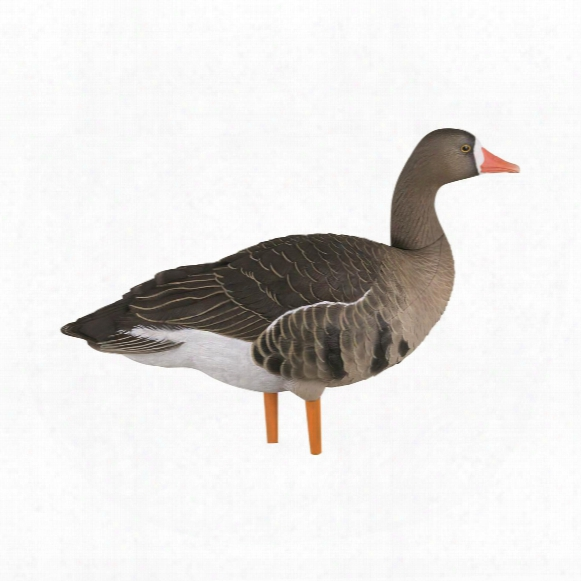 Avian-x, Axp Painted Fusion, Full Body Specklebelly Goose Decoys, 6 Pack