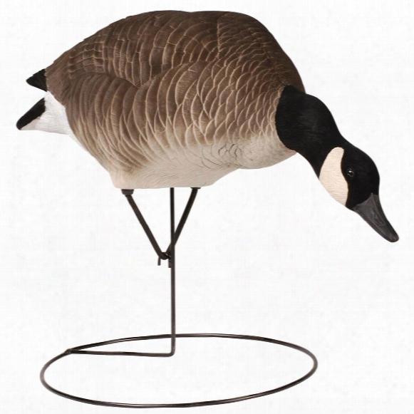 6-pk. Tanglefree® Pro Series Canada Goose Full Body Feeder Decoys