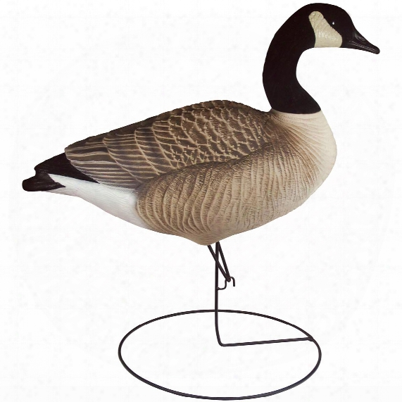 6-pk. Tanglefree® Pro Series Canada Goose Full Body Upright Decoys