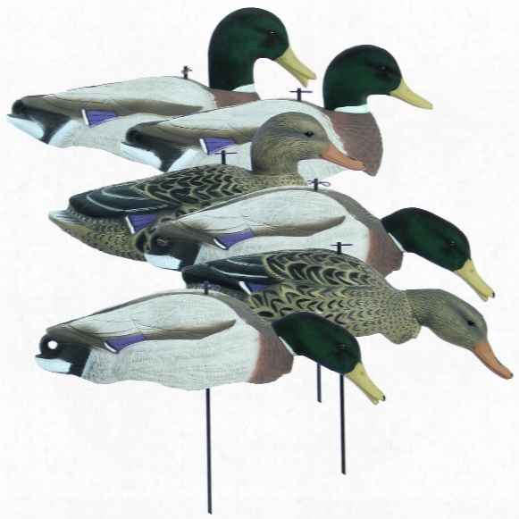 6-pk. Of Higdon® Magnum Full Form Shell Mallard Decoys With Flocked Heads