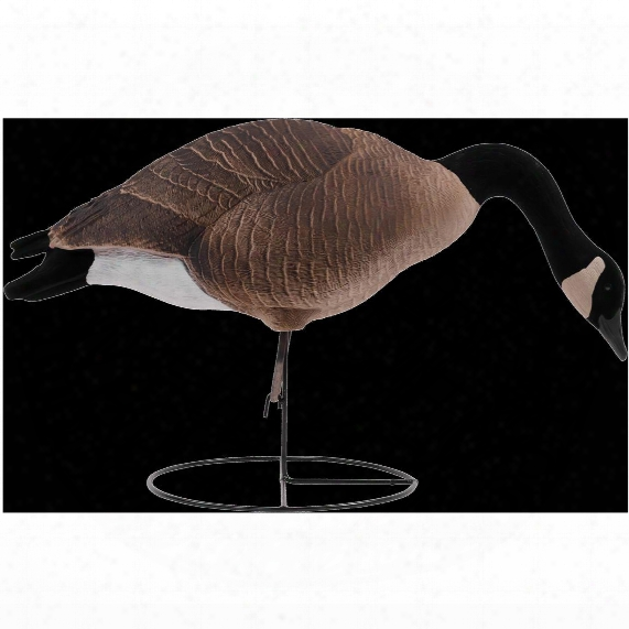 Tanglefree Pro Series 4-pc. Greater Canada Goose Full Body Flocked Decoy Set