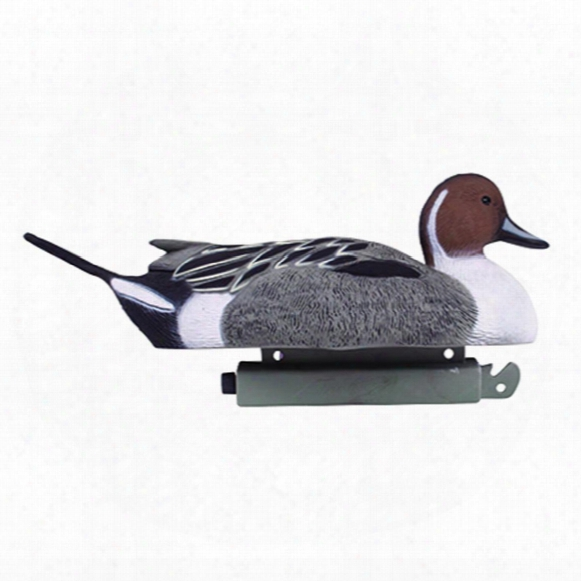Tanglefree Pro Series 6-pc. Magnum Pintail Duck Decoy Set