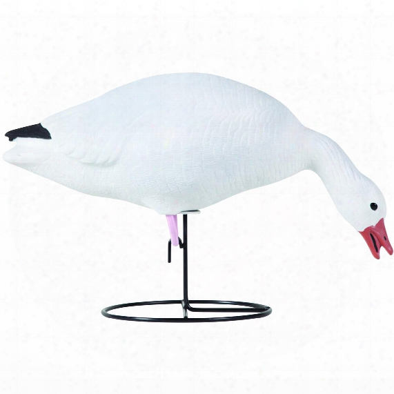 Tanglefree Pro Series 6-pc. Snow Goose Full Bodt Decoy Set