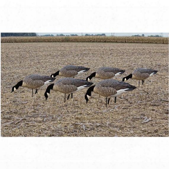 Avian-x Flocked Feeder Lesser Goose Decoys, 6 Pack