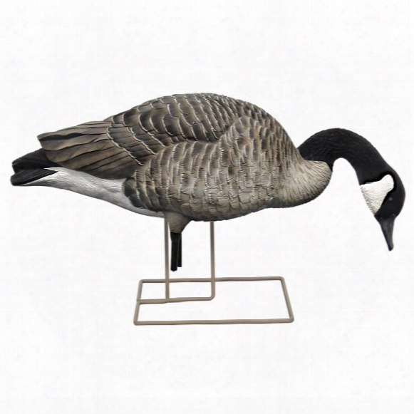 Avian-x Flocked Honkers Canada Goose Decoys, 6 Pack