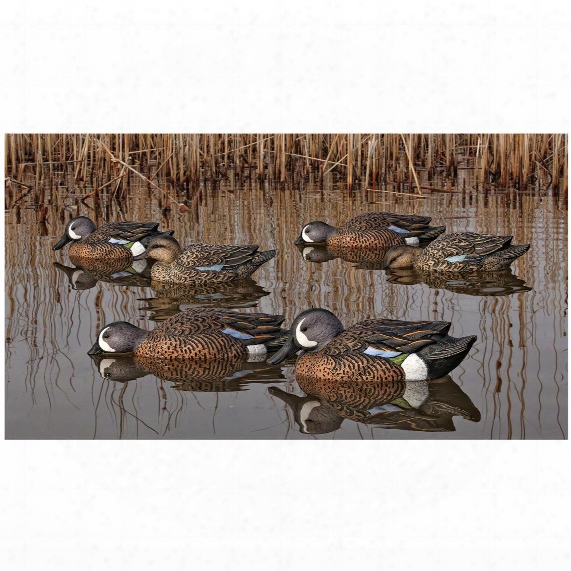 Avian-x Top Flight Blue Winged Teal Duck Decoys, 6 Pack