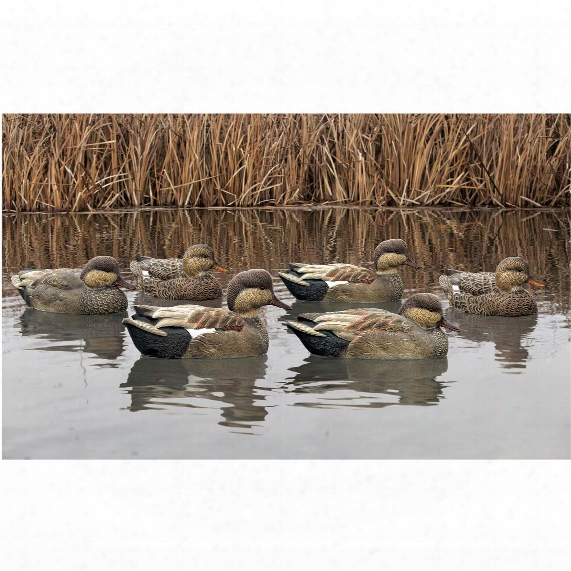Avian-x Top Flight Gadwall Gray Duck Decoys, 6 Pack
