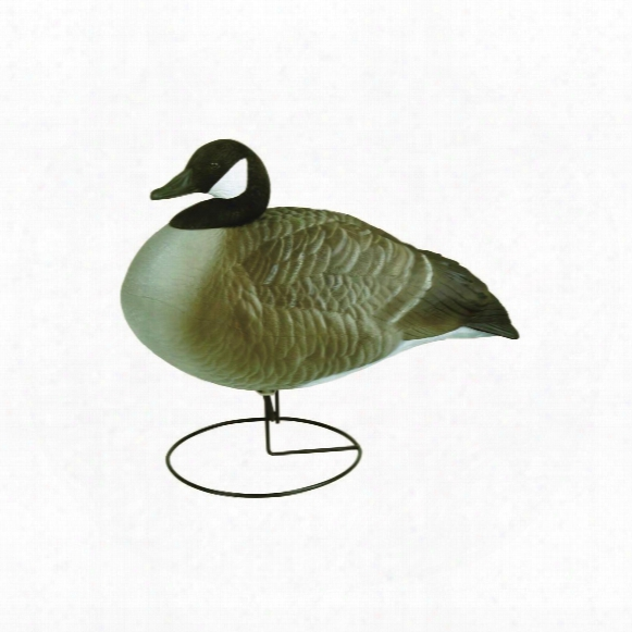 Flambeau Stormfront Full Body Canada Goose Relaxed Decoys, 4 Pack