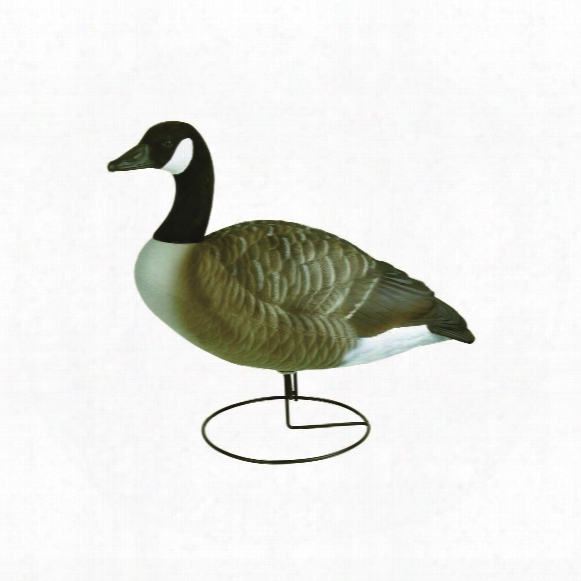 Flambeau Stormfront Full Body Canada Goose Standard Decoys, 6 Pack