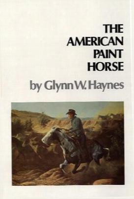 American Paint Horse