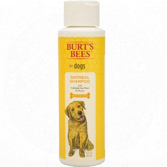 Burt's Bees Oatmeal Shampoo For Dogs (16 Fl Oz)