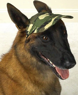"Casual Canine Camo Cap Medium (7 1/2""l X 6""w)"