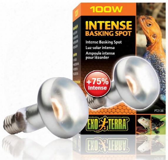 Exo Terra Intense Basking Spot Lamp (100 W)