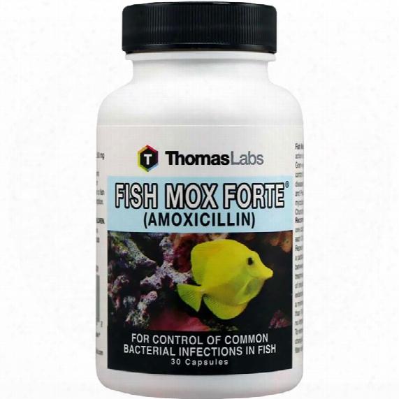 Fish Mox (amoxicillin) 250mg (30 Capsules)