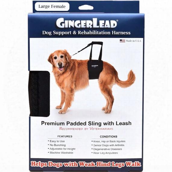 Gingerlead Dog Support & Rehabilitation Harness - Large Female