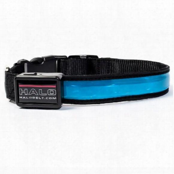 Halo Mini Led Safety Dog Collar Blue - Large