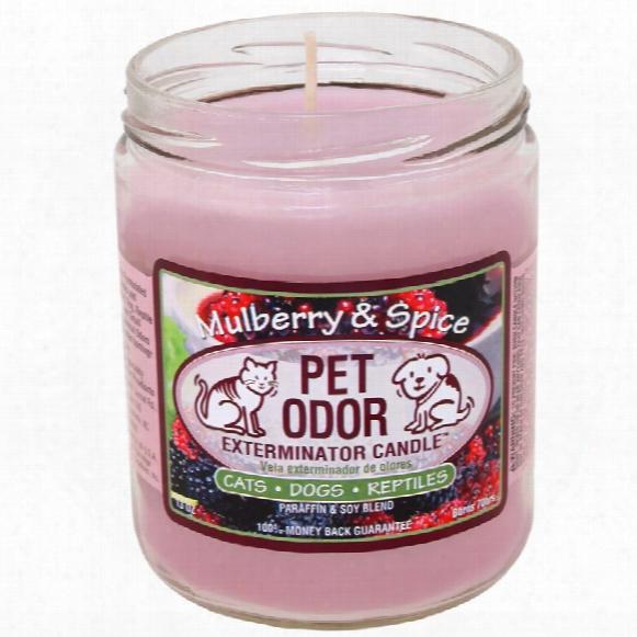 Pet Odor Exterminator Candle - Mulberry & Spice Jar (13 Oz)