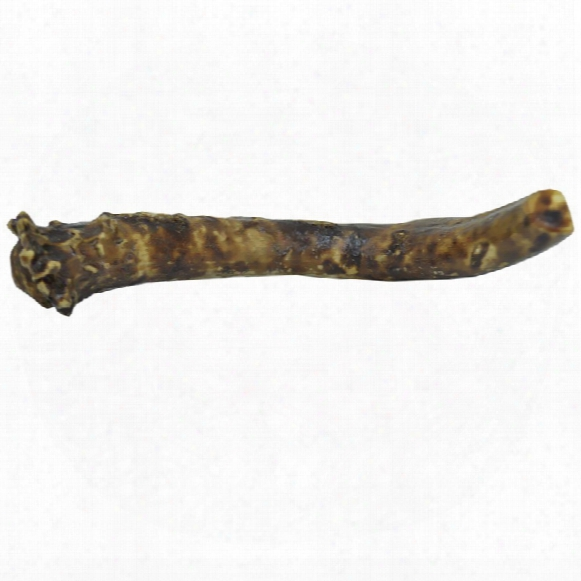 Redbarn Bully Coated Antler Dog Chew - Solid (jumbo)