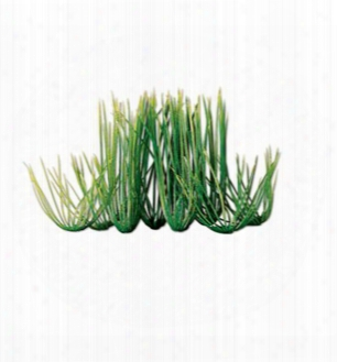 Tetra Water Wonders Aquarium Plant Hairgrass 12""