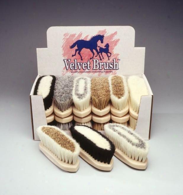 12 Pack Natural Fiber Brush Display
