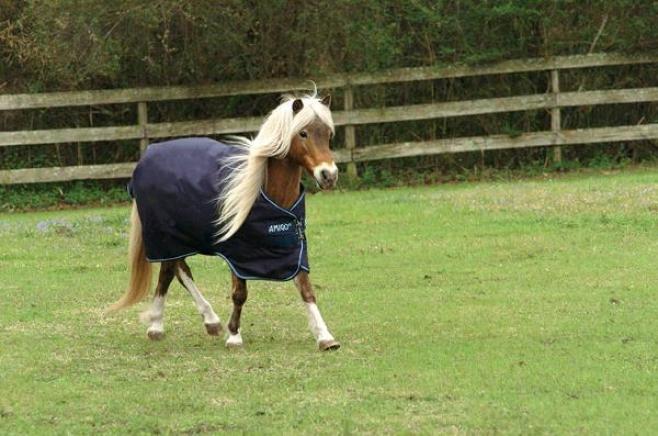 Amigo Pony Lw Turnout Sheet