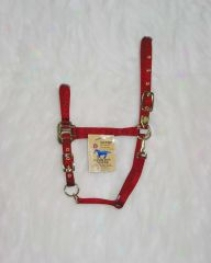 Arabian Horse Halter - Red - Averate