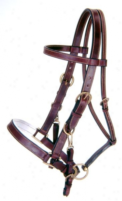 Australian Outrider Collection Leather Bridle/ Halter Alliance