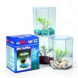 Betta Keeper With Lid - Small