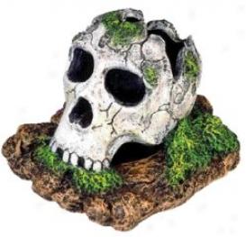 Shattered Skull Small Aquarium/terrarium Ornament