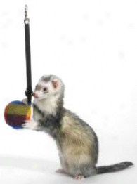 Bungee Toy For Ferrets - Blue