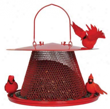 Cardial No/no Bird Feecer - Red