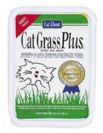 Cat Grass Plus Catnip Seeds
