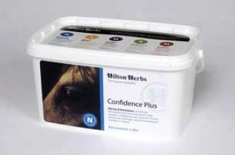 Confidence Plus For Horses - 2.2 Lb