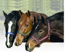 Equi-star Break Away Halter