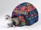 Ferret Igloo According to Multiple Ferrets - Multicolor