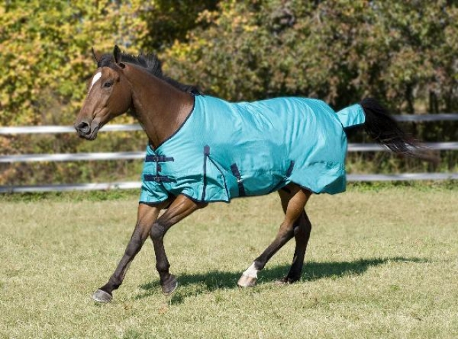 Great Value!! Mcalister 600d Waterproof Hw Turnout Blanket