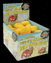 Hermit Crab Sponge - Natural - 36 Piece
