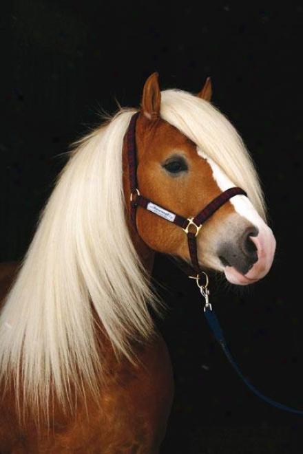 Horseware Nylon Padded Halter