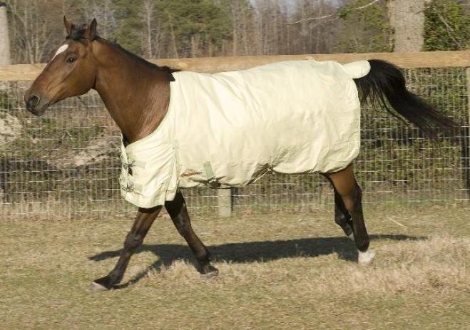 Huge Savingss!! Mcalister 600d Mediumweight Turnout Blanket