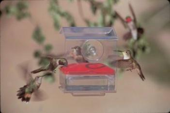 Hummingbird Nectar Bar Window - Red