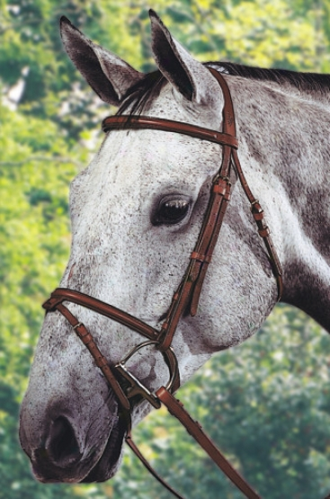 Jaguar Plain Raised Bridle Wit hFlash And Reins - Ajtumn - Horse