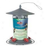 Lightpost Feeder Hummingbird