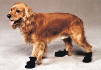 Need Dry Feet? Dog Non-skid Boots For Rain And Snow