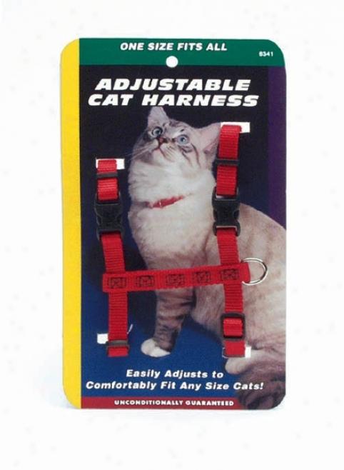ragdoll cat mannerisms