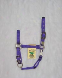 Nylon Chin Halter For Yearlings - Purple - Yearling