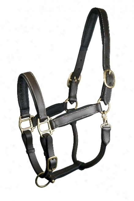 Padded Leather Halter Fully Adjustable