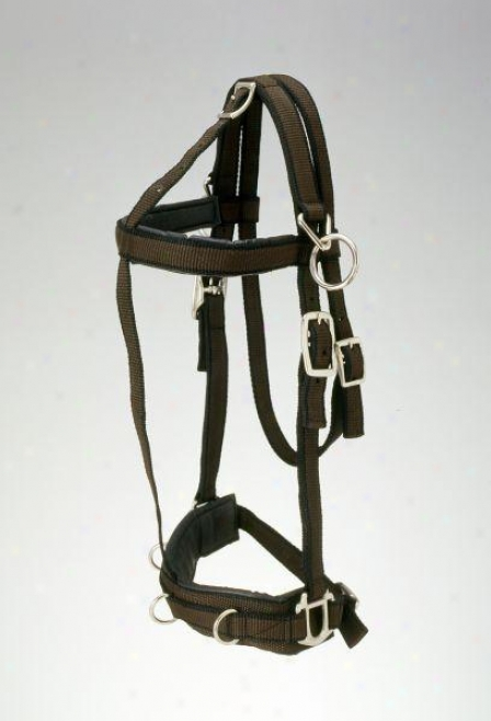 Performers 1st Choice Pro Nylon Training Halter - Horse