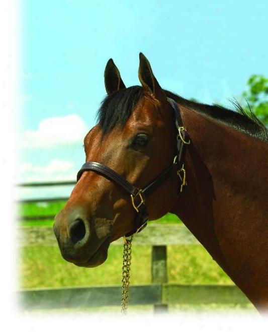Perri's Replacement Chin Piece - Havana - Horse
